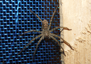 Trip to Amazon - house SPIDER